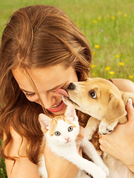 BARF Menü Katze & Hund