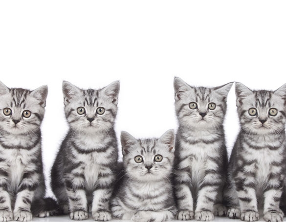 BARFen bei Katzen