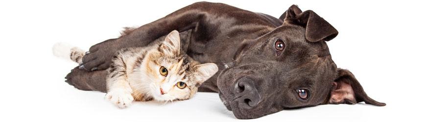 Gesunde Ernährung für Hunde und Katzen