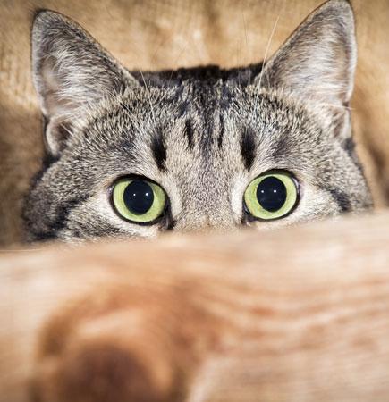 BARF Leckerli für Katzen