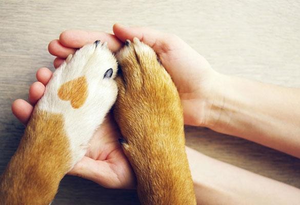 BARF Hundeernährung