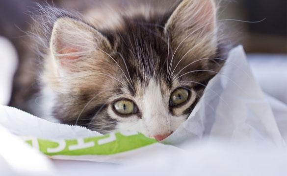 BARF Futter Katze
